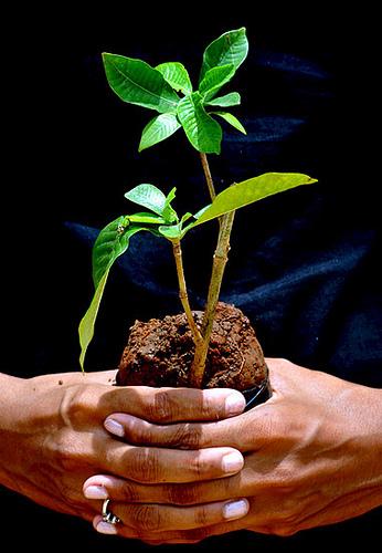 España entra en deuda ecológica con el planeta